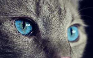 CanvaでブログやTwitterのヘッダー・アイキャッチ画像の最適なサイズ|WordPress JIN