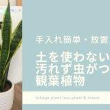 室内用の観葉植物におすすめのハイドロカルチャー