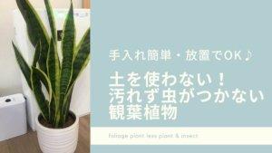 【手入れ簡単・放置でOK】土を使わない!汚れず虫がつかない観葉植物