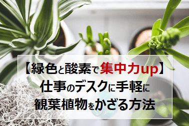 【緑色と酸素で集中力up】仕事のデスクに手軽に観葉植物をかざる方法