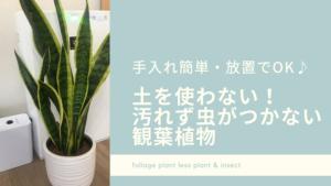 土を使わないから汚れない 虫のつかない観葉植物